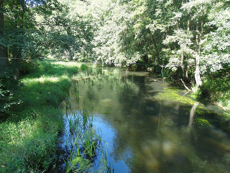 Rzeka Dobrzyca