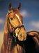 Konie i jeździectwo